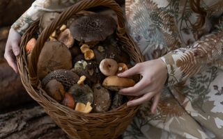 Охота на грибы! Советы диетолога.